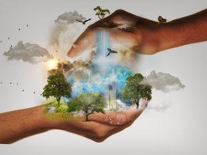 La reforestation & ses bénéfices