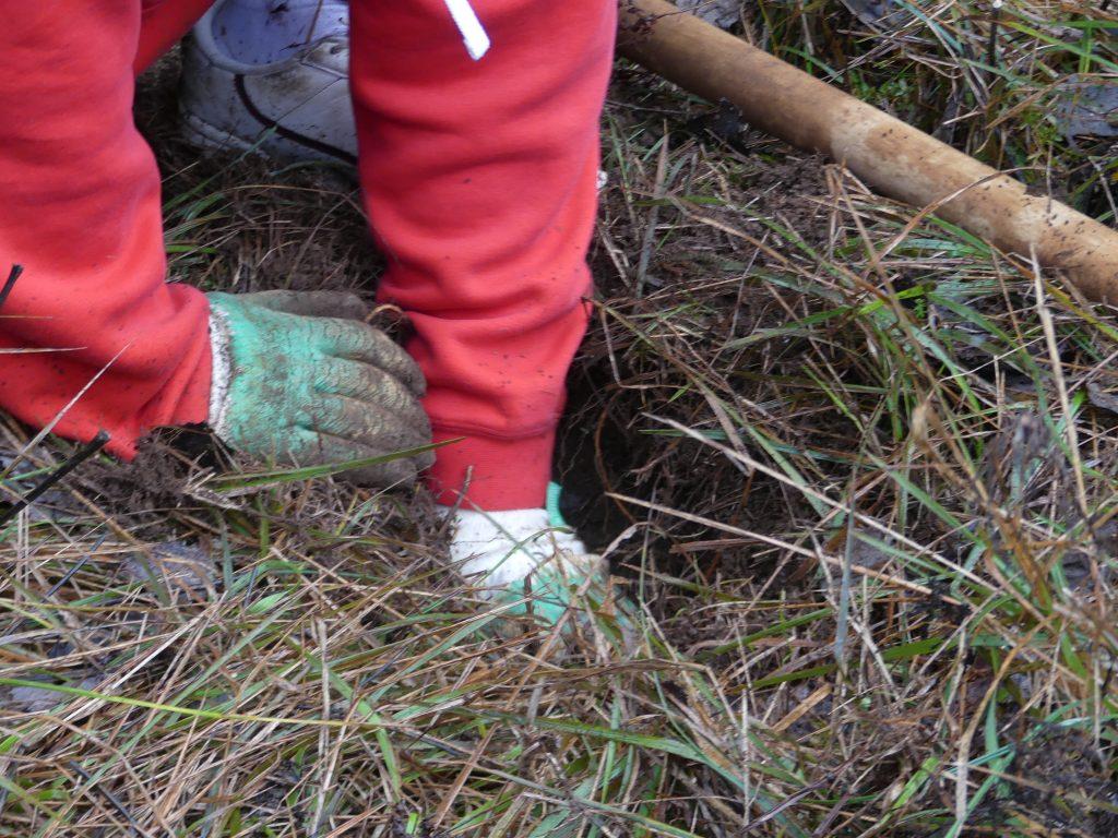 association écologique et forestière FC - plantation de sapins 24.11.2019 (11)