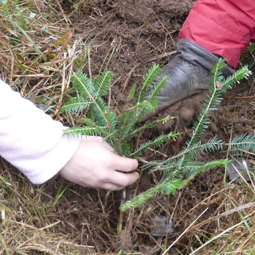 cropped-association-ecologique-et-forestiere-FC-plantation-de-sapins-24.11.2019-9-scaled-2.jpg