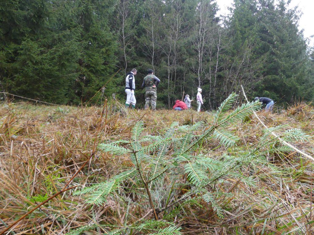 les bénévoles plantent des épicéas dans le Jura